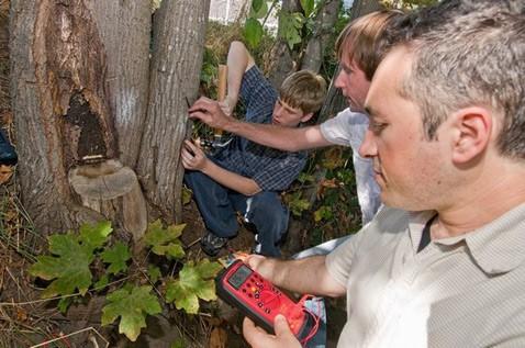 Американцы впервые запитали микросхему от живого дерева