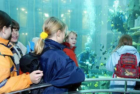 Aquadom: лифт поднимает туристов в глубины аквариума