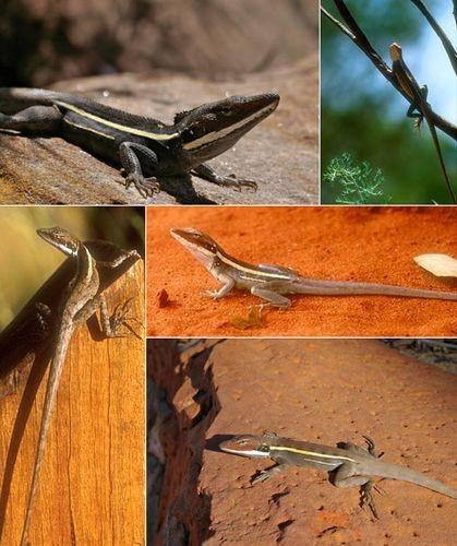Бег рептилий на задних лапах остался загадкой
