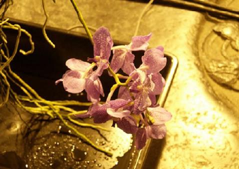 Душа умершей орхидеи продолжает жить вкомпьютере