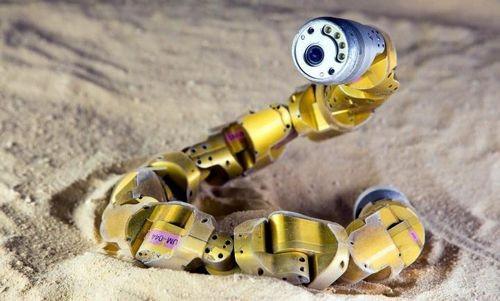 Гремучие змеи тренируют роботов-змей