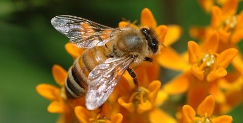 Интеллект и сознание насекомых недооценивались