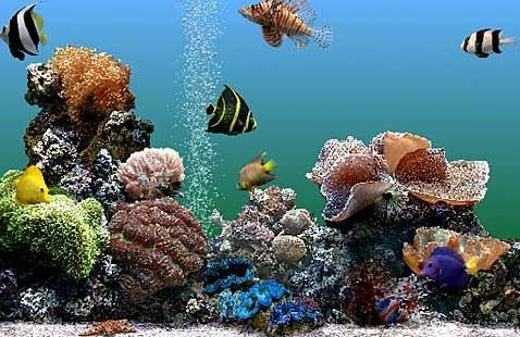 Iquarium: виртуальные рыбы учат людей гидродинамике