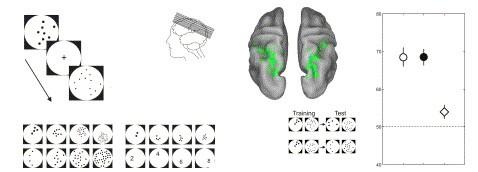 Исследователи извлекли числа и фотографии из голов испытуемых