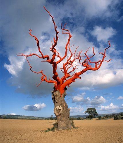 Яркие краски оживили мёртвые деревья