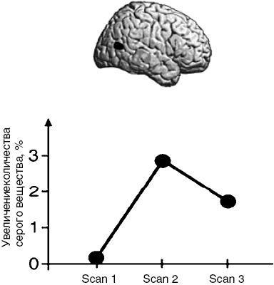"""Картография и """"обратная разработка"""": в сша и европе досконально изучат человеческий мозг"""