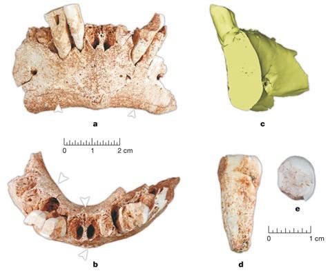 Найден древнейший предок европейцев