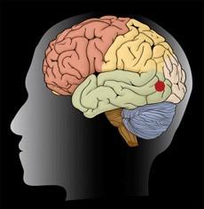 Невролог хочет обмануть свой мозг, чтобы приоткрыть тайну сознания