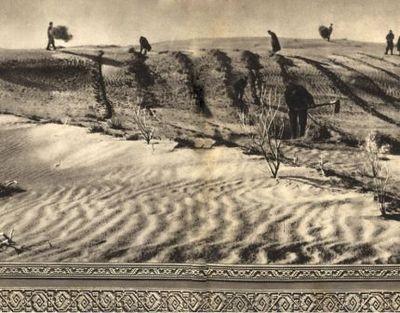 Охота на таланты, или одинокий бамбук посреди пустыни