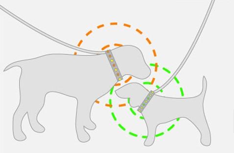 Ошейник snif вынюхивает разведданные для хозяев собак