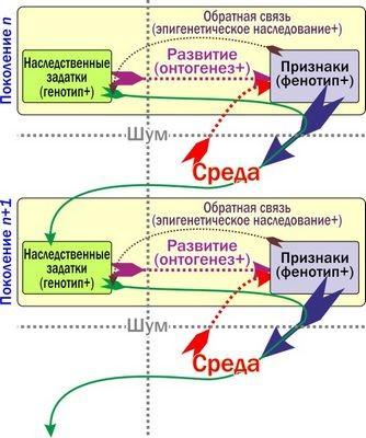 Первые, вторые и третьи репликаторы по сьюзен блэкмор, происхождение жизни и общая схема фазовых переходов в эволюции