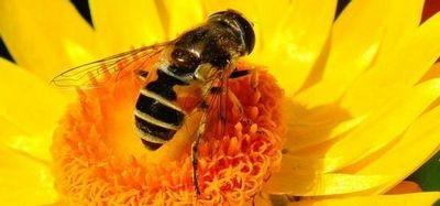Роботам придётся опылять цветы после вымирания пчёл?