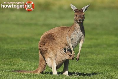 Страна кенгуру пытается описать себя большими данными