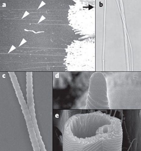 Тарантул цепляется за стены липкими нитками из ног