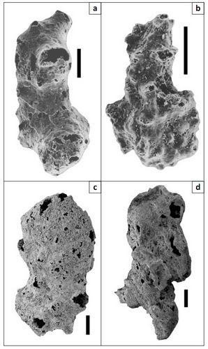 Учёные нашли останки первых животных на планете