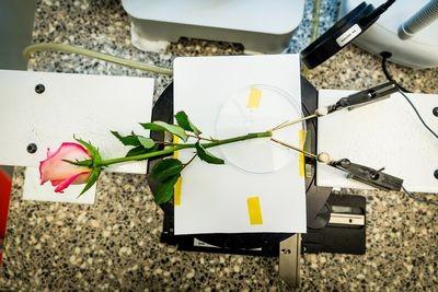 В швеции разработали цветок-киборг