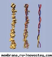Впервые создана молекулярная модель внутреннего уха